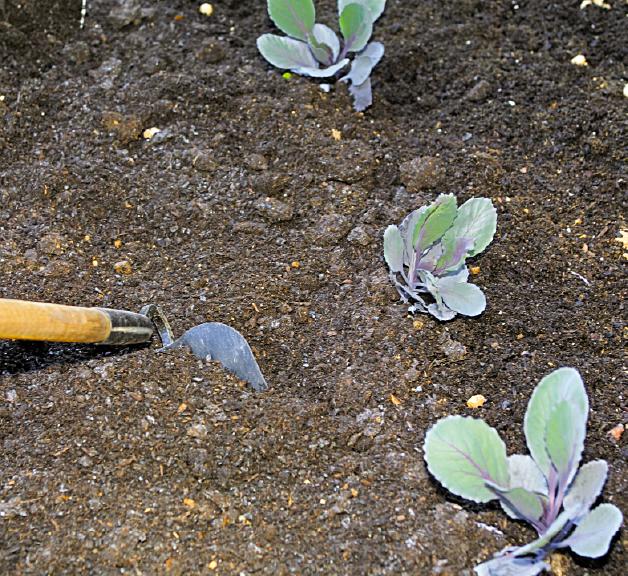 Applying Organic Fertilizers - Grown By You