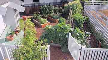 Home vegetable garden behind a garage with an open garden gate.