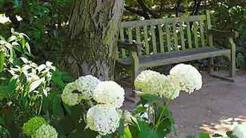 Hydrangea with garden bench beneath a large landscape tree. Copyright ©2002 by Dolezal & Associates. All Rights Reserved.